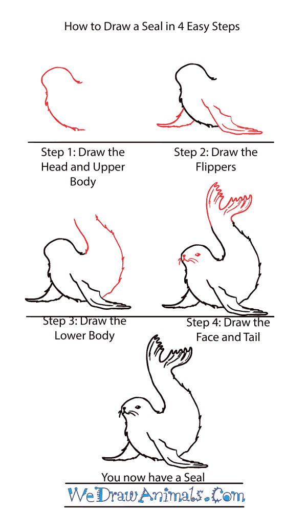 How to Draw a Cute Seal - Step-by-Step Tutorial