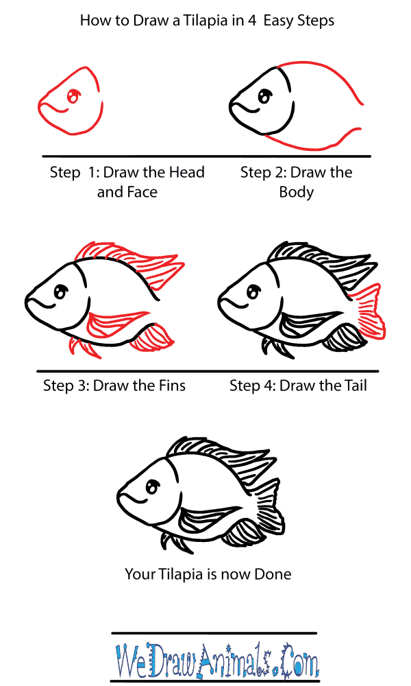 How to Draw a Cute Tilapia - Step-by-Step Tutorial