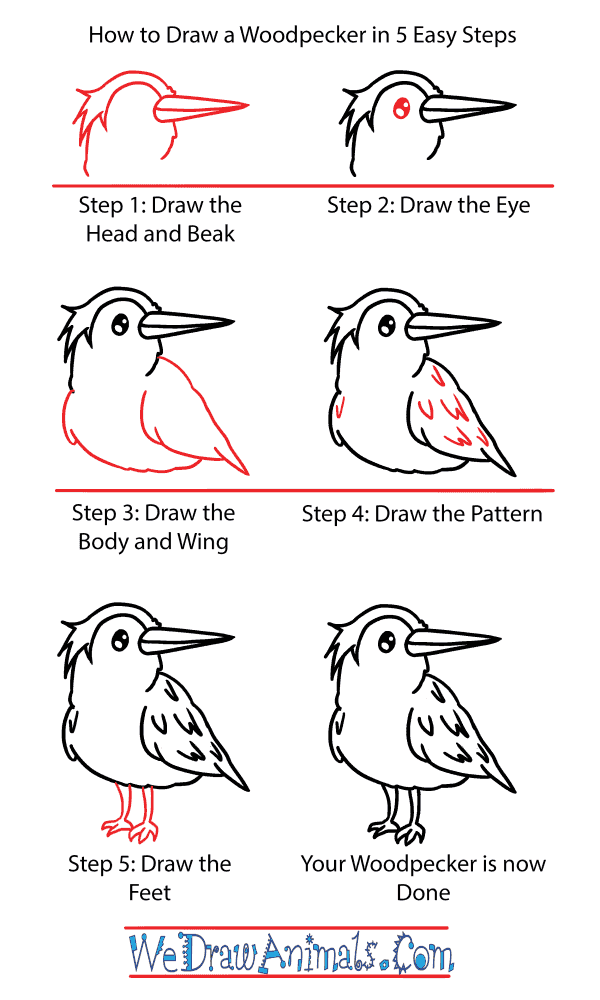 How to Draw a Cute Woodpecker - Step-by-Step Tutorial