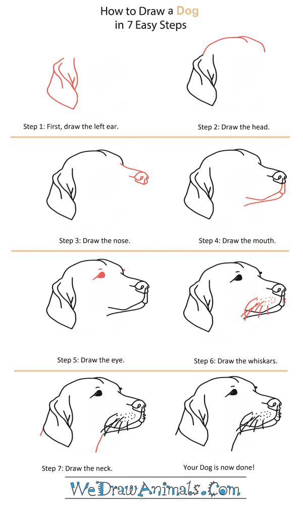 How to Draw a Dog Head - Step-by-Step Tutorial