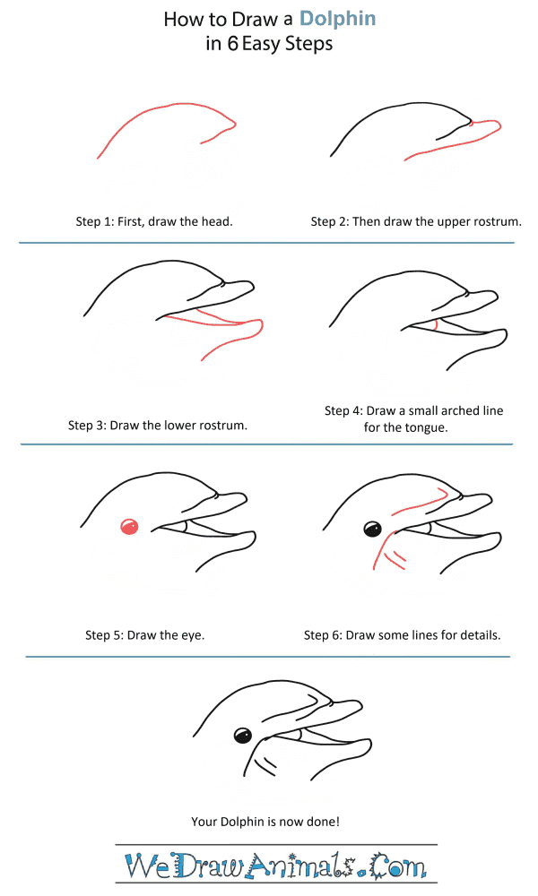 How to Draw a Dolphin Head - Step-by-Step Tutorial