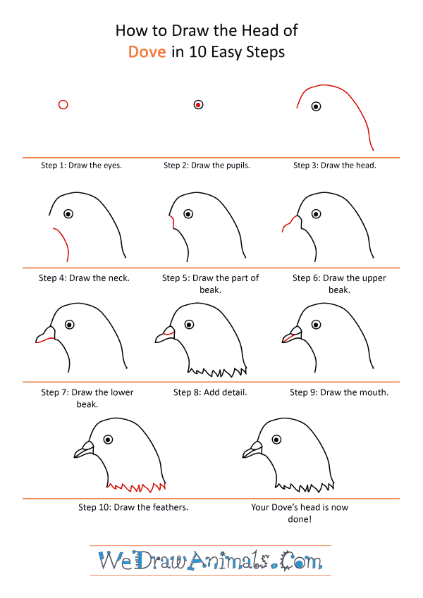 How to Draw a Dove Face - Step-by-Step Tutorial