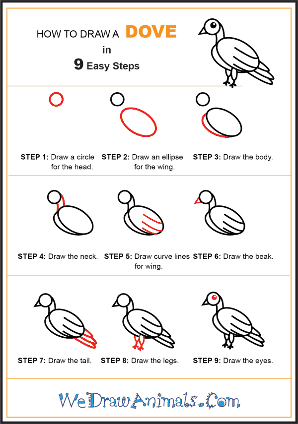 How to Draw a Dove for Kids - Step-by-Step Tutorial
