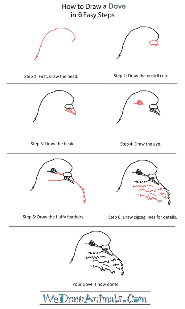 How to Draw a Dove Head - Step-by-Step Tutorial