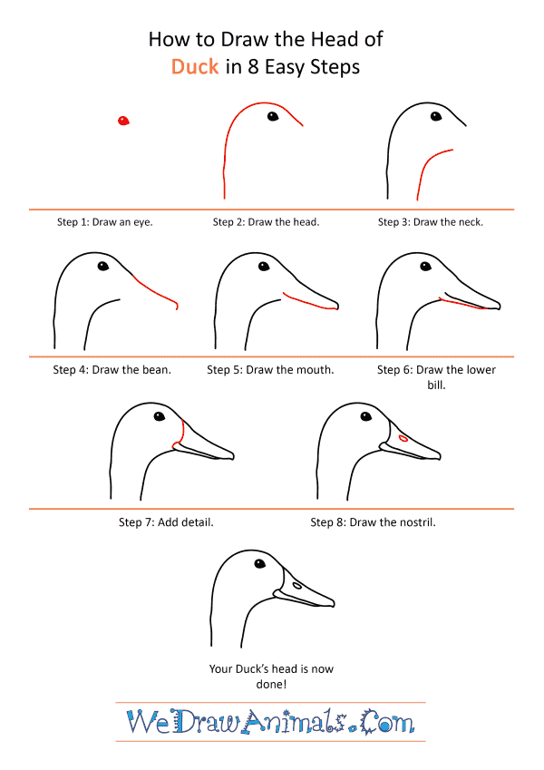 How to Draw a Duck Face - Step-by-Step Tutorial