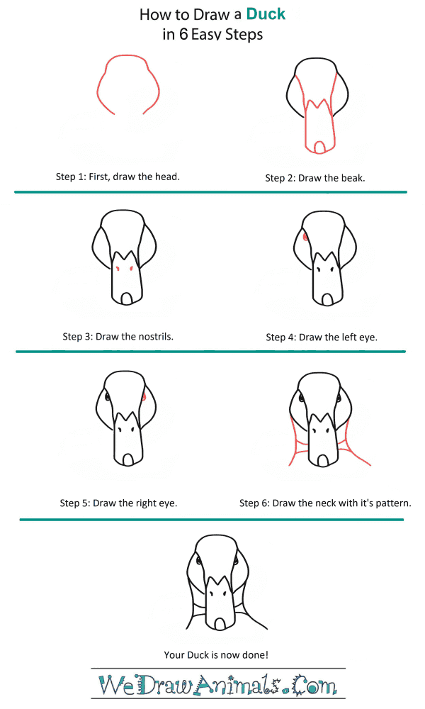 How to Draw a Duck Head - Step-by-Step Tutorial
