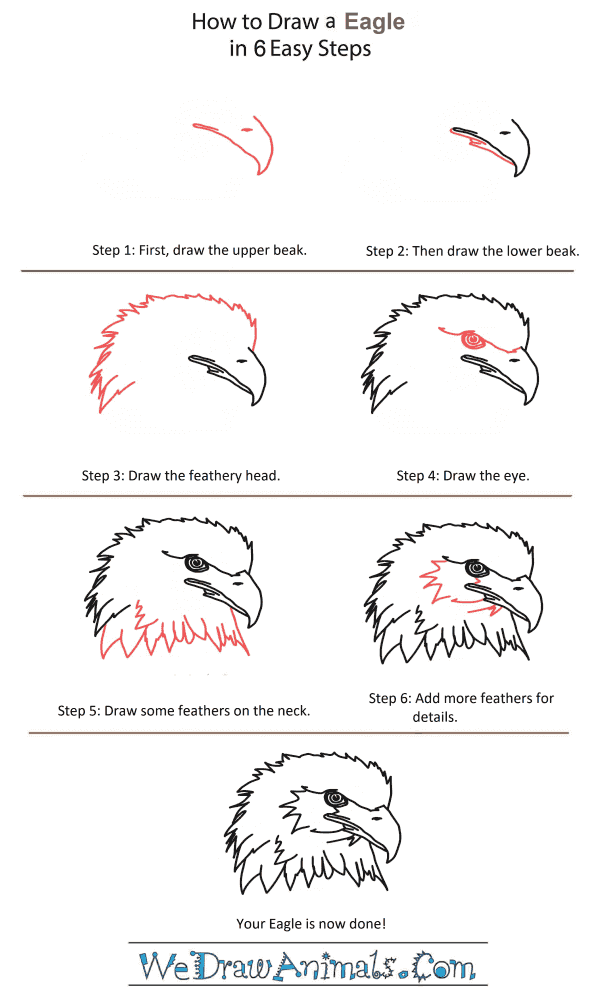 How to Draw an Eagle Head - Step-by-Step Tutorial