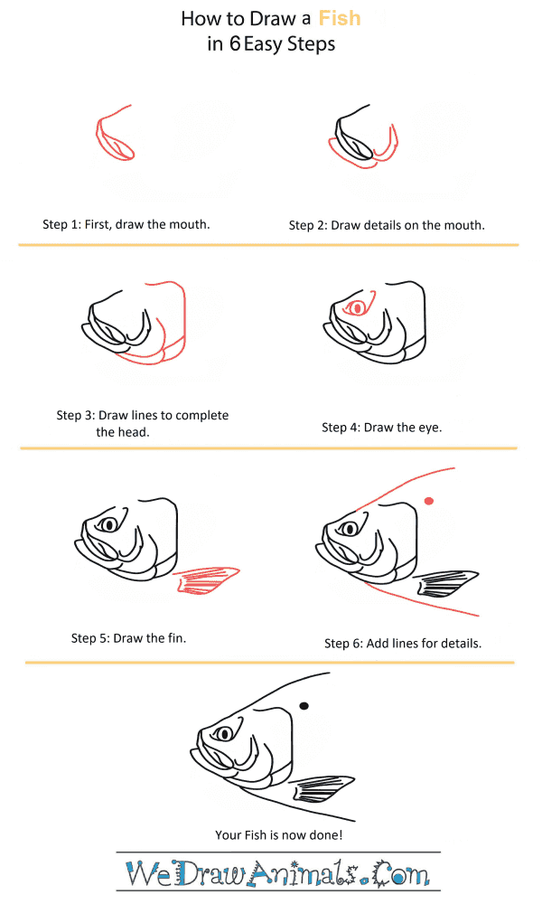 How to Draw a Fish Head - Step-by-Step Tutorial