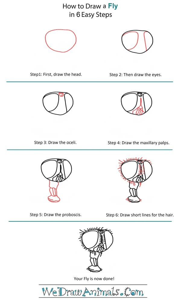 How to Draw a Fly Head - Step-by-Step Tutorial