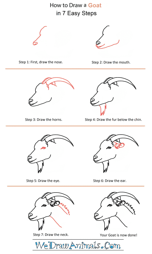 How to Draw a Goat Head - Step-by-Step Tutorial