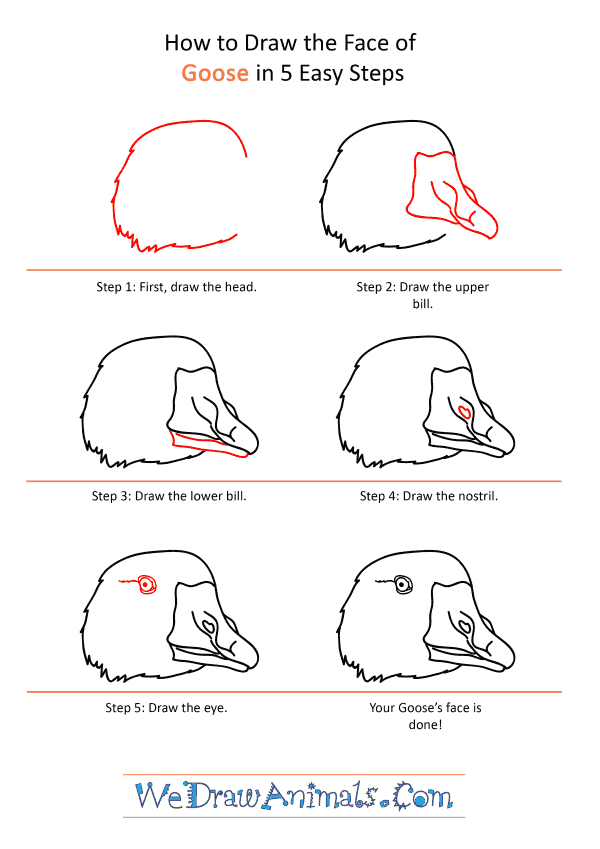 How to Draw a Goose Face - Step-by-Step Tutorial