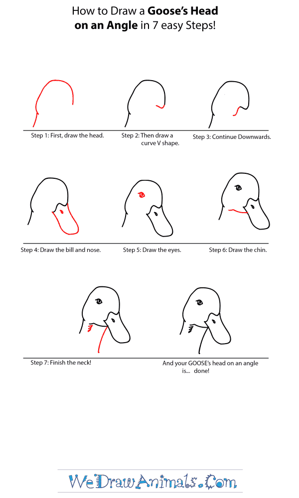 How to Draw a Goose Head - Step-by-Step Tutorial