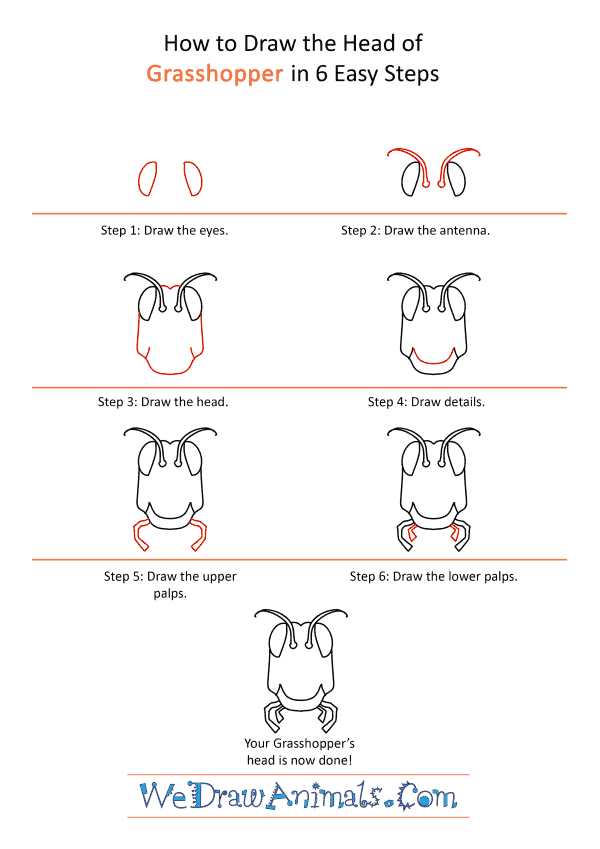 How to Draw a Grasshopper Face - Step-by-Step Tutorial