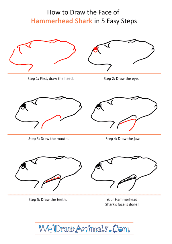 How to Draw a Hammerhead Shark Face - Step-by-Step Tutorial