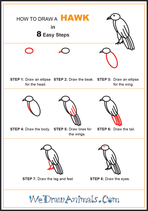 How to Draw a Hawk for Kids - Step-by-Step Tutorial