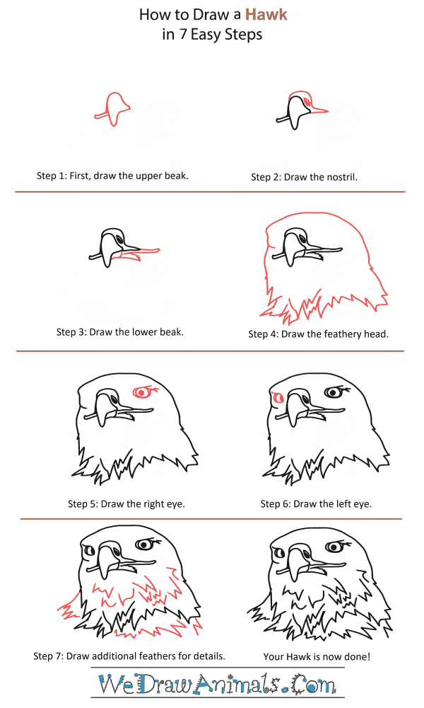 How to Draw a Hawk Head - Step-by-Step Tutorial