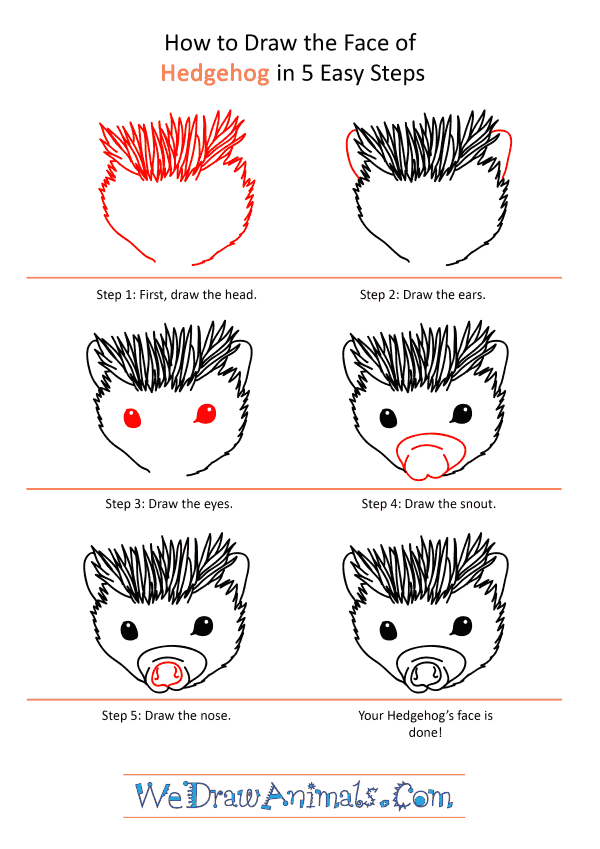 How to Draw a Hedgehog Face - Step-by-Step Tutorial