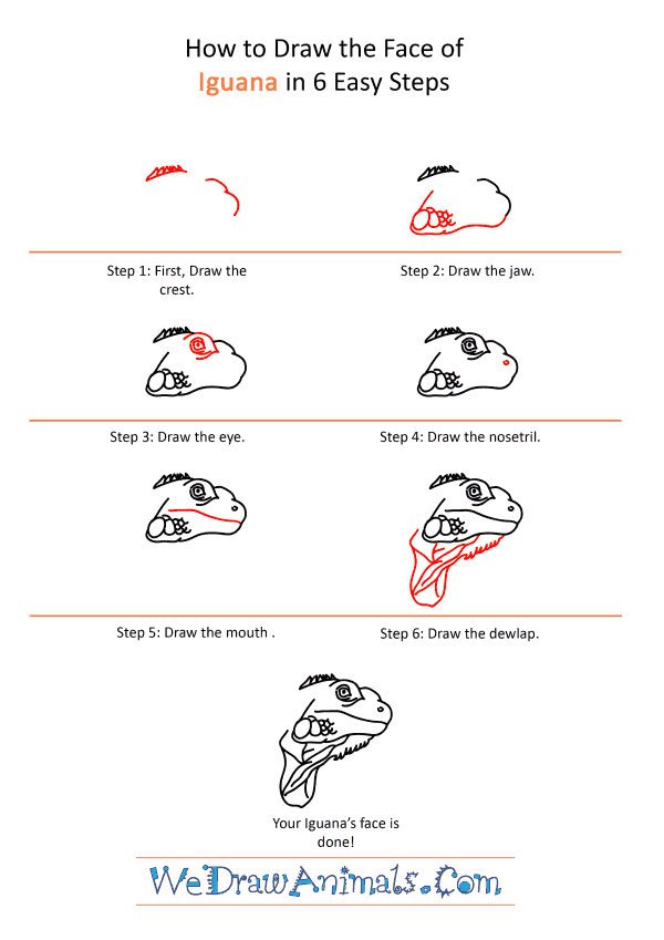 How to Draw an Iguana Face - Step-by-Step Tutorial