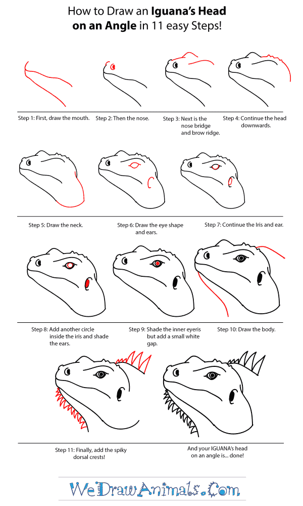 How to Draw an Iguana Head - Step-by-Step Tutorial