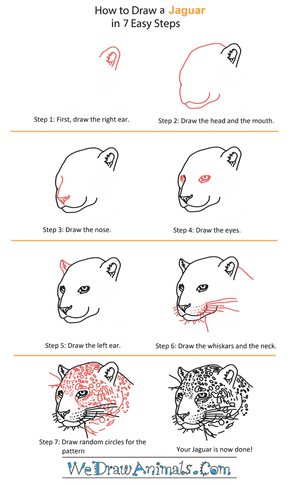 How to Draw a Jaguar Head - Step-by-Step Tutorial