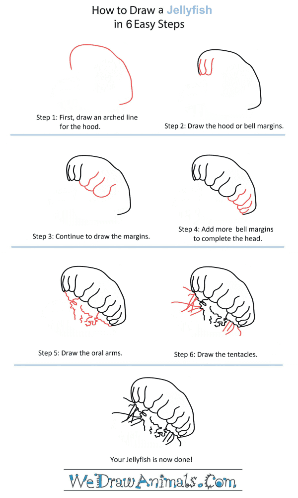 How to Draw a Jellyfish Head - Step-by-Step Tutorial