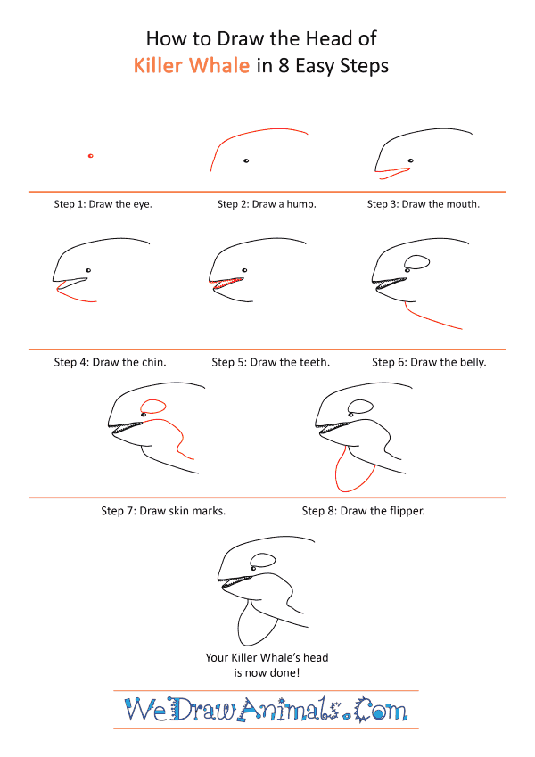 How to Draw a Killer Whale Face - Step-by-Step Tutorial