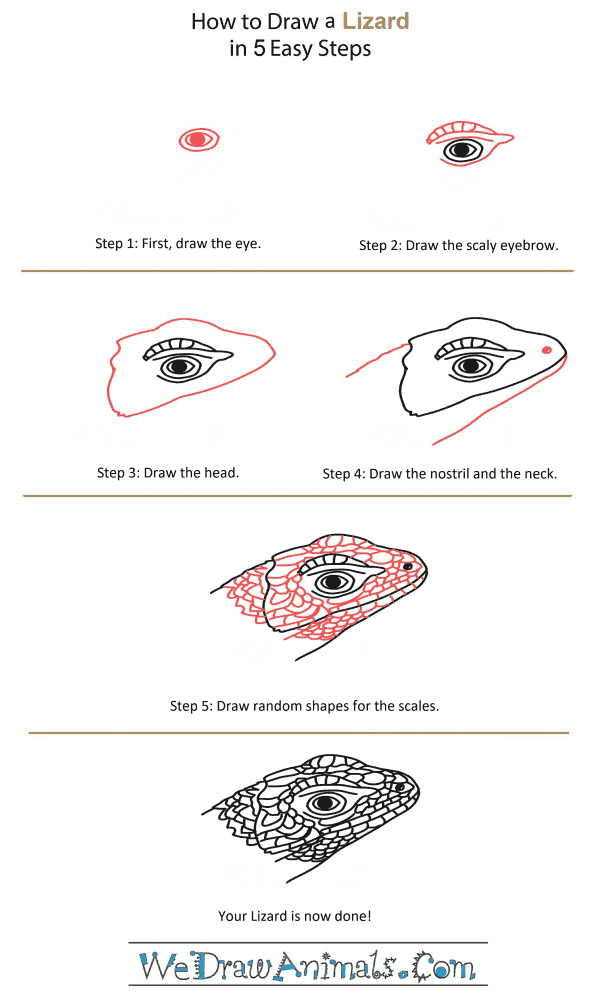 How to Draw a Lizard Head - Step-by-Step Tutorial