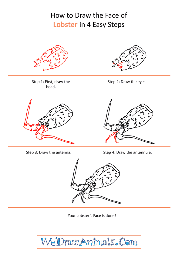 How to Draw a Lobster Face - Step-by-Step Tutorial