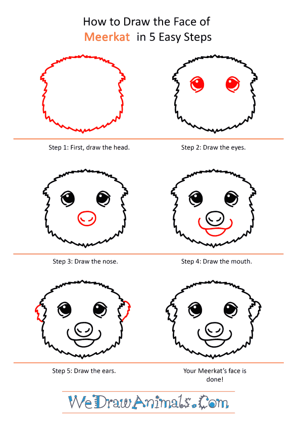 How to Draw a Meerkat Face - Step-by-Step Tutorial