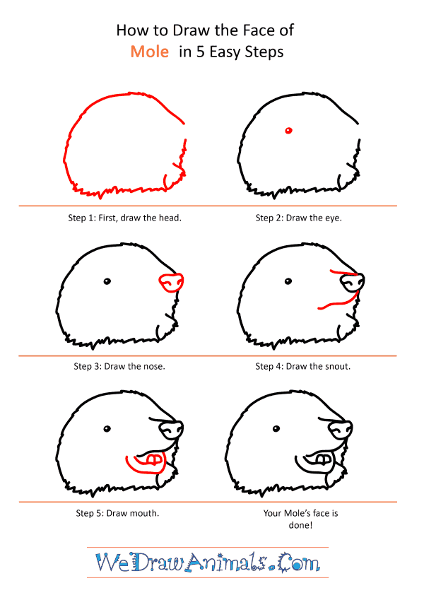 How to Draw a Mole Face - Step-by-Step Tutorial