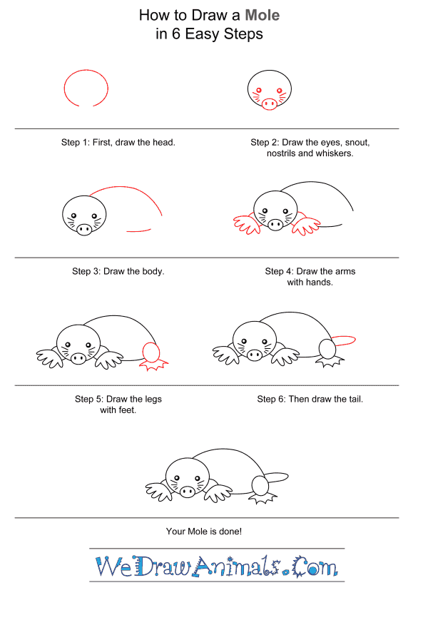 How to Draw a Mole for Kids - Step-by-Step Tutorial