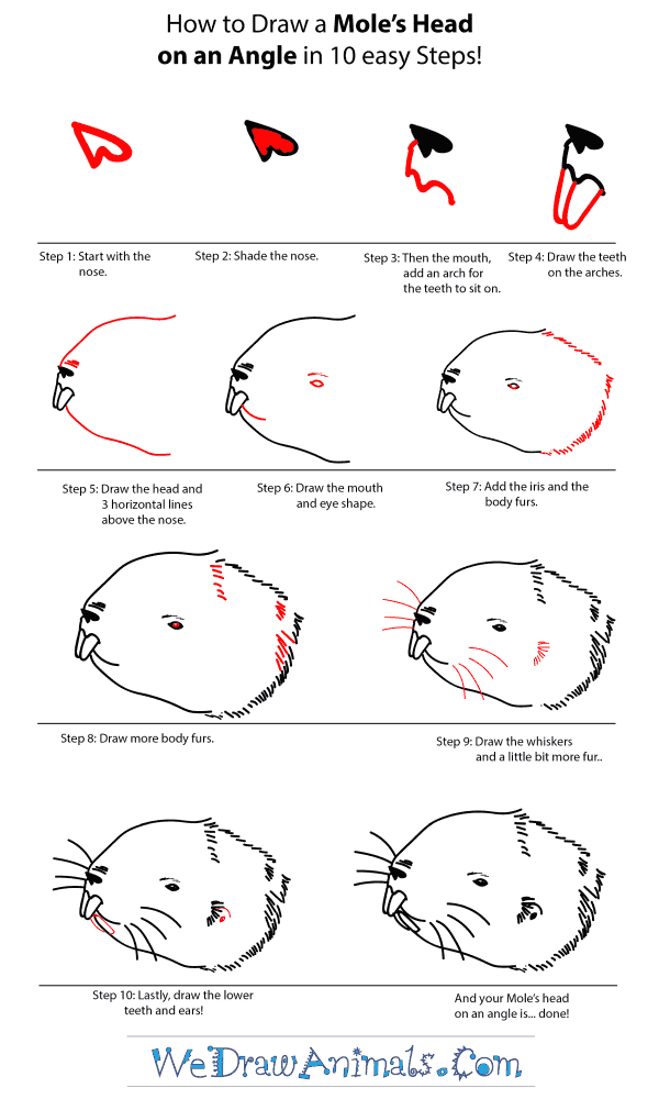 How to Draw a Mole Head - Step-by-Step Tutorial