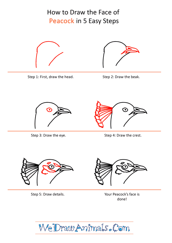 How to Draw a Peacock Face - Step-by-Step Tutorial