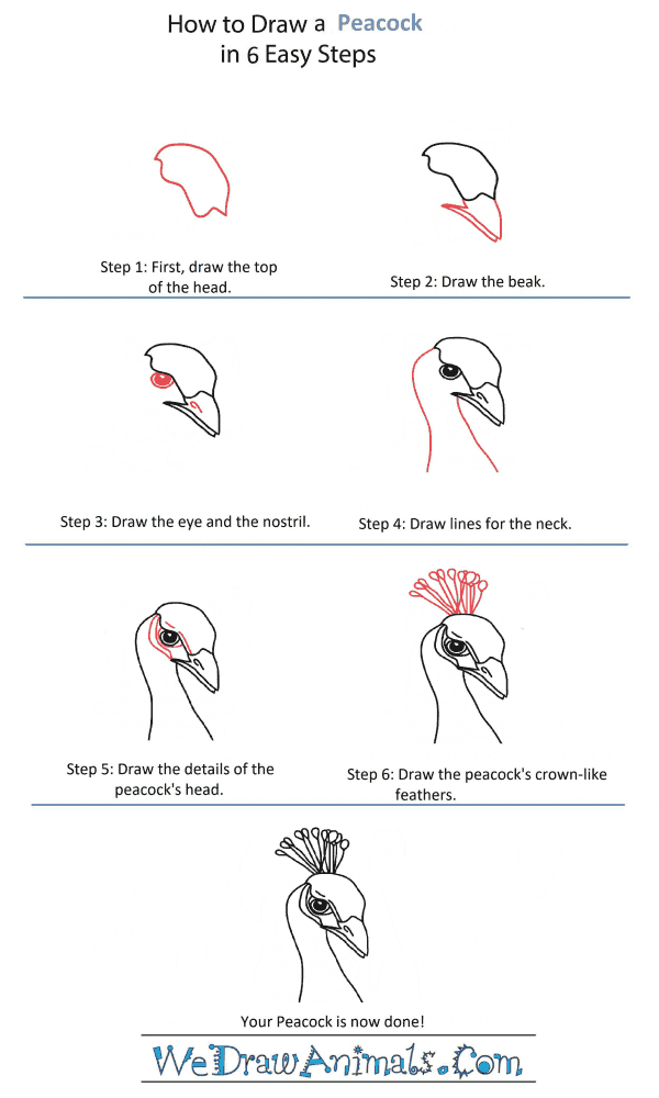 How to Draw a Peacock Head - Step-by-Step Tutorial
