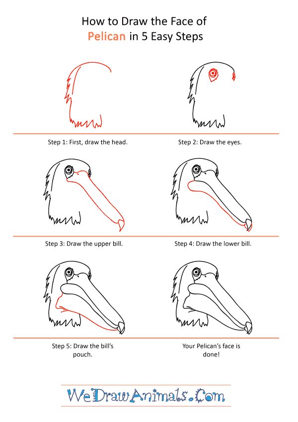 How to Draw a Pelican Face - Step-by-Step Tutorial