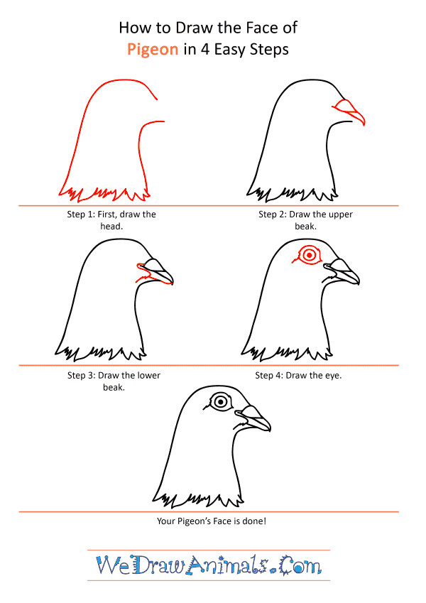 How to Draw a Pigeon Face - Step-by-Step Tutorial