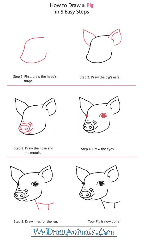 How to Draw a Pigeon Head - Step-by-Step Tutorial