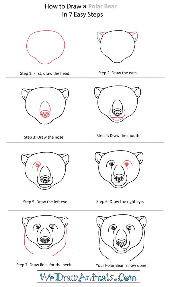 How to Draw a Polar Bear Head - Step-by-Step Tutorial