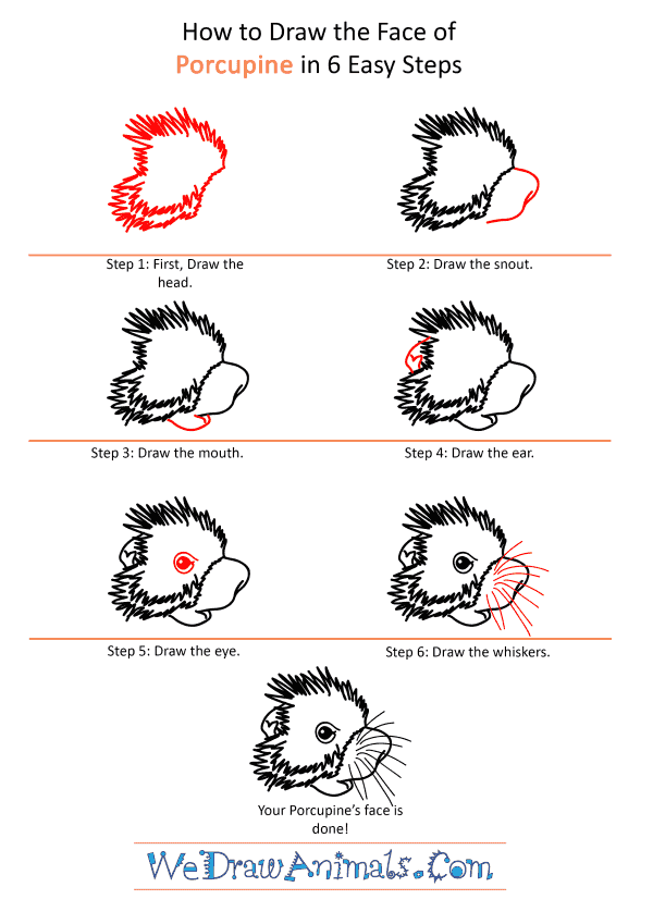 How to Draw a Porcupine Face - Step-by-Step Tutorial