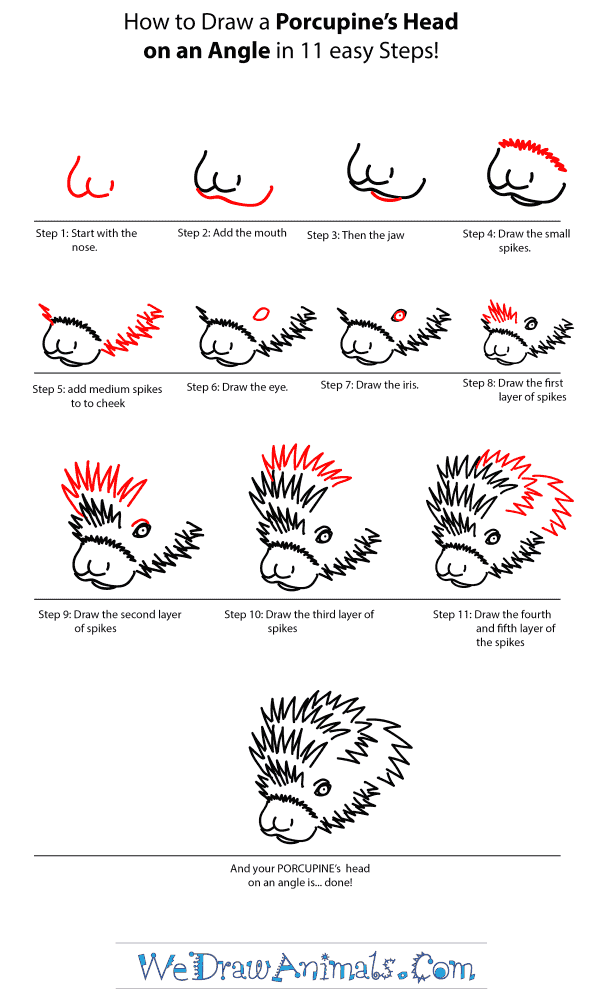 How to Draw a Porcupine Head - Step-by-Step Tutorial