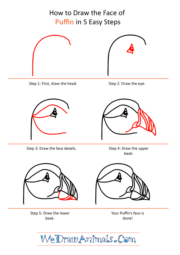 How to Draw a Puffin Face - Step-by-Step Tutorial