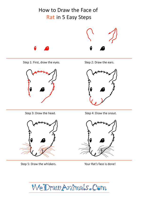 How to Draw a Rat Face - Step-by-Step Tutorial