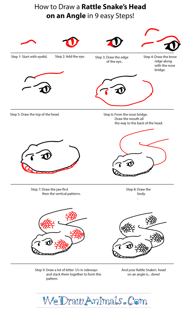 How to Draw a Rattlesnake Head - Step-by-Step Tutorial