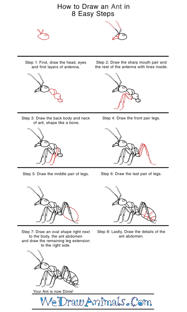 How to Draw a Realistic Ant - Step-by-Step Tutorial