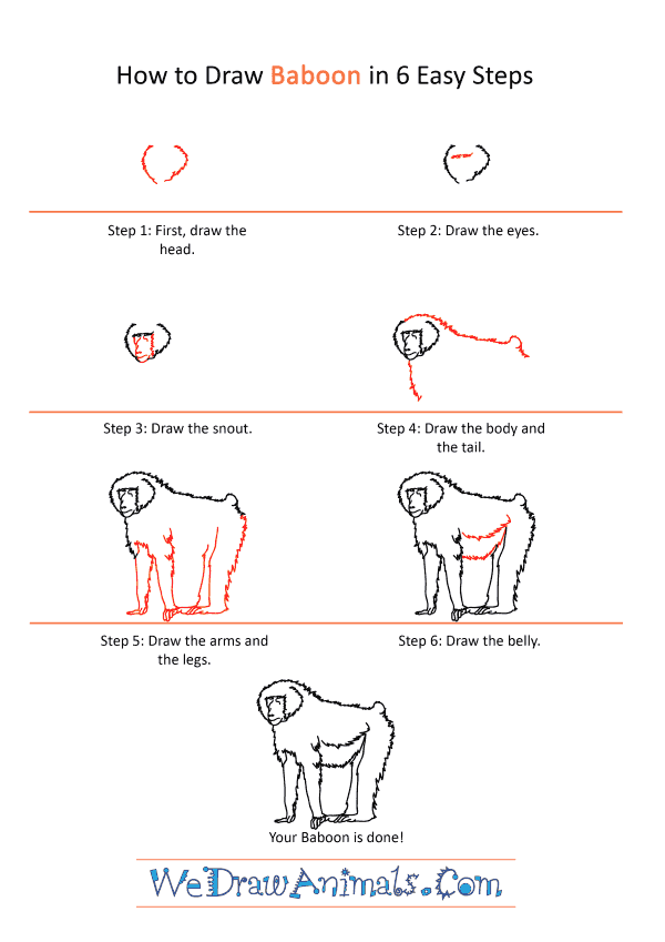 How to Draw a Realistic Baboon - Step-by-Step Tutorial