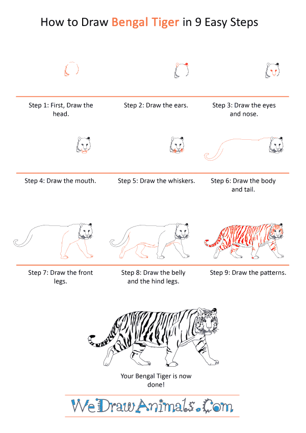 How to Draw a Realistic Bengal Tiger - Step-by-Step Tutorial