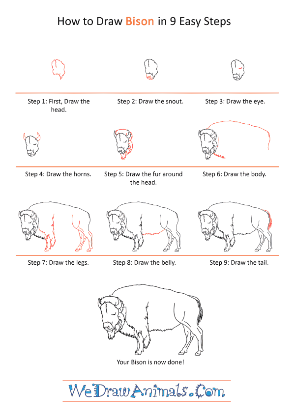 How to Draw a Realistic Bison - Step-by-Step Tutorial