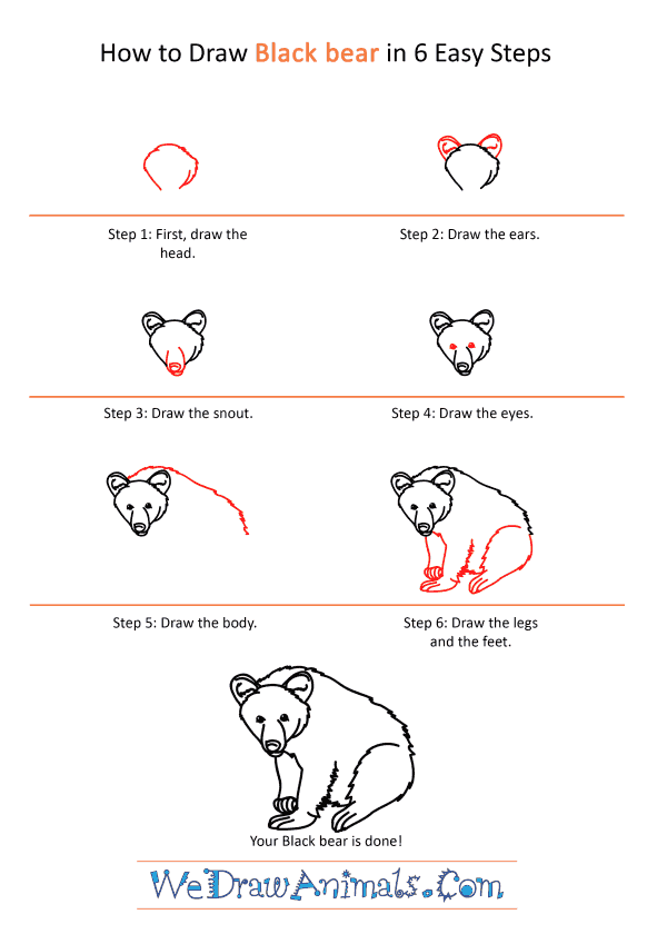 How to Draw a Realistic Black Bear - Step-by-Step Tutorial