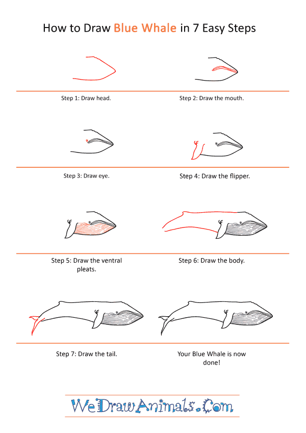 How to Draw a Realistic Blue Whale - Step-by-Step Tutorial