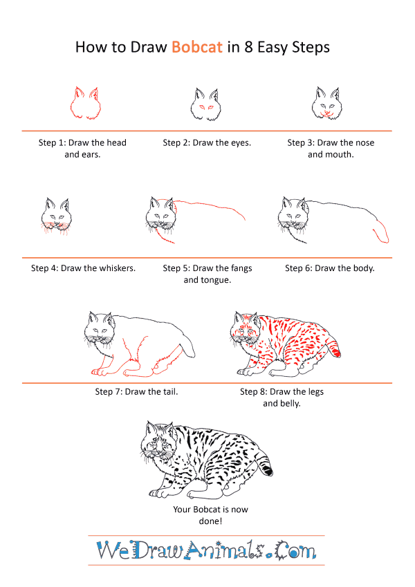 How to Draw a Realistic Bobcat - Step-by-Step Tutorial